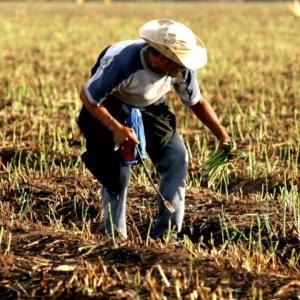 农业支付应用ProducePay获7700万美元融资